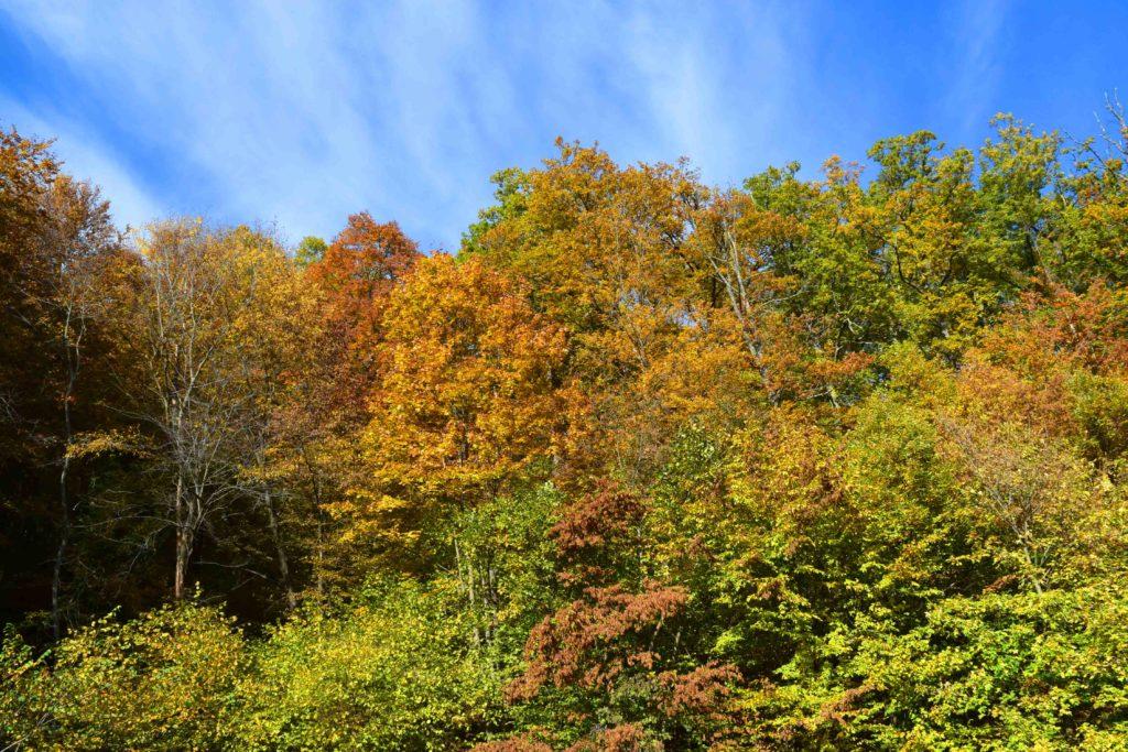 Herbst in Kroatien