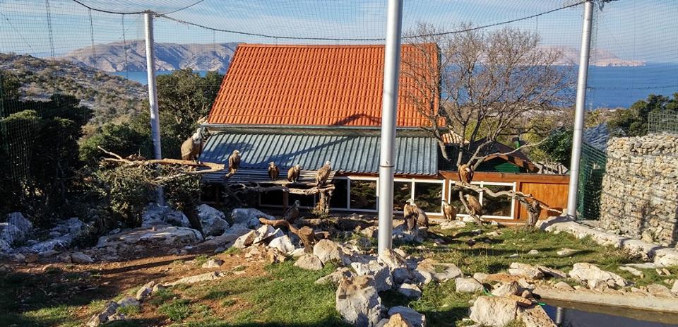 Greifvogelschutzzentrum Grifon, Kroatien