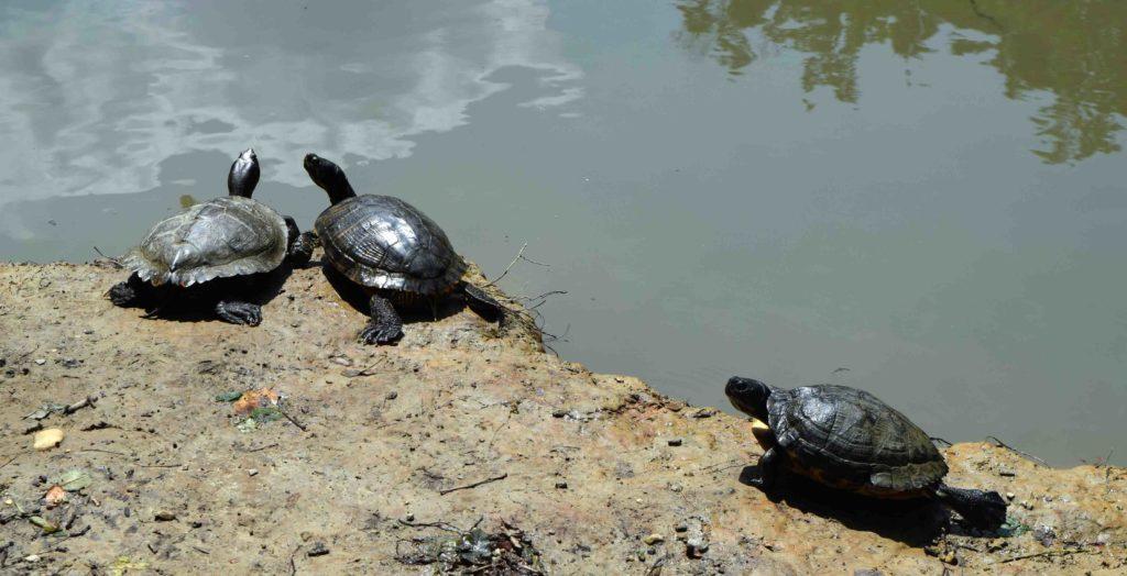 Schildkröten im Park Maksimir Zagreb