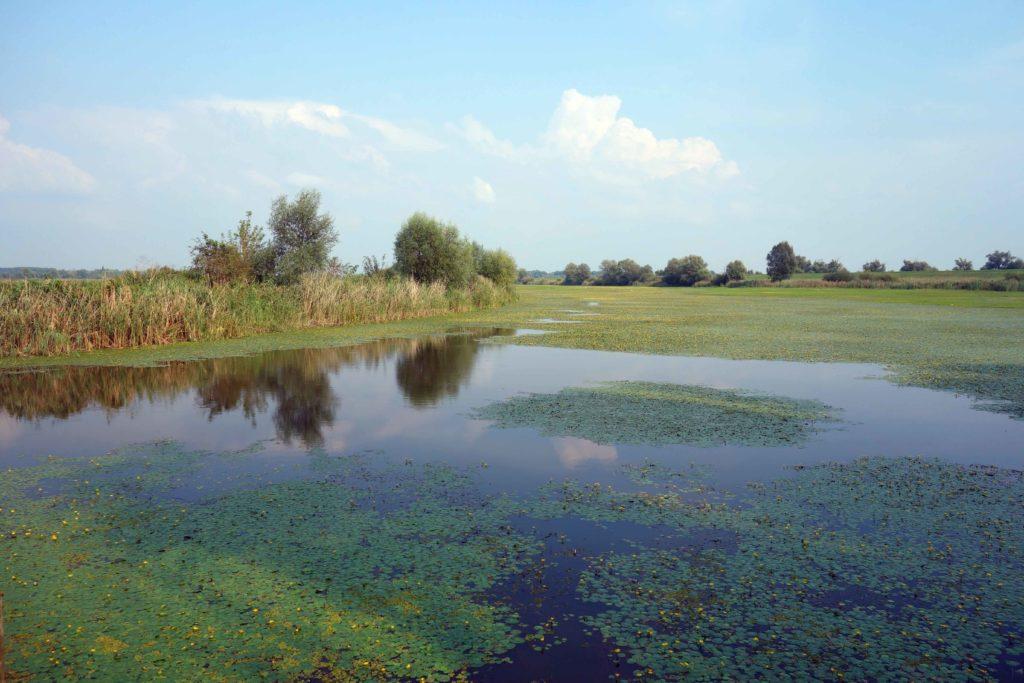 Sumpf im Naturpark Kopacki rit