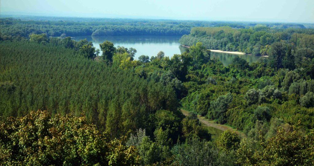 Blick über die Donau von Batina