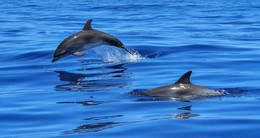 Rettung der Adria-Delfine