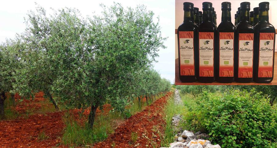 Olea Prima Bio Olivenöl, Vodnjan